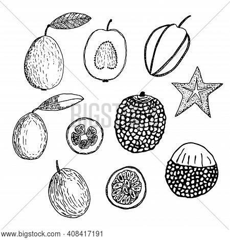 Set Of Tropical Fruits Vector Illustration Guava Carambola Kumquat Lychee And Passion Fruit Hand Dra