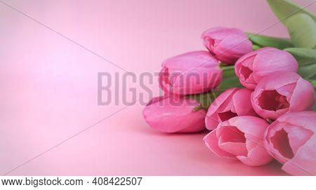 Spring Flowers Bunch Of Pink Tulips On Pink Background With Free Space For Text. Spring Mood. Flower