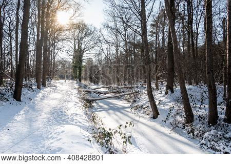 Snow Covered Sunny Forest Landscape With A Ditch That Flows Through The Forest, Photo Taken In The N