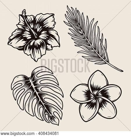 Tropical Floral Vintage Monochrome Collection With Beautiful Plumeria Hibiscus Flowers Palm And Mons