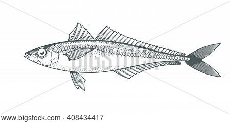 Horse Mackerel Sketch, Hand Drawn Fish, Jack Mackerel Seafood Menu, Scad Fish In Engraved Style, Vec