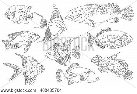 Tropical Sea And Aquarium Fishes Collection On White Background. Set Of Freshwater And Saldwater Aqu