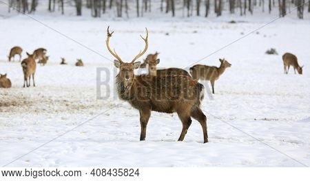 wild deer stay on winter meadow