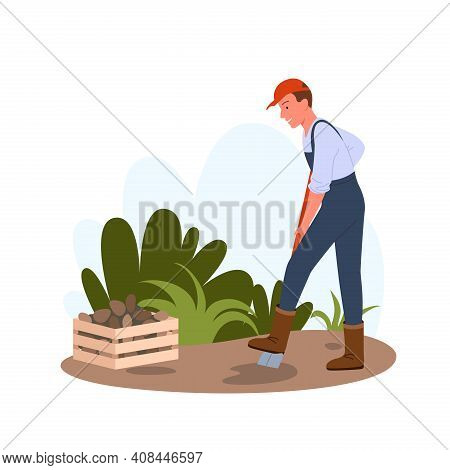 People Dig Potatoes In Garden Or Field, Holding Shovel And Working, Farming Harvest Time