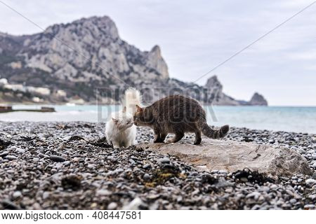 Two Cats Meet And Get To Know Each Other On A Pebble Sea Beach
