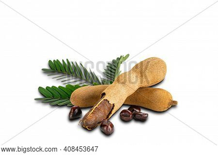 Tamarind With Leaves And Seeds On White Background With Clipping Path. Ripe Tamarind Peel Shell And