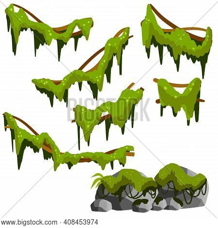 Set Of Branches With Moss And Green Grass. Marsh Plant. Part Of The Scenery Of The Jungle. Swamp Sto