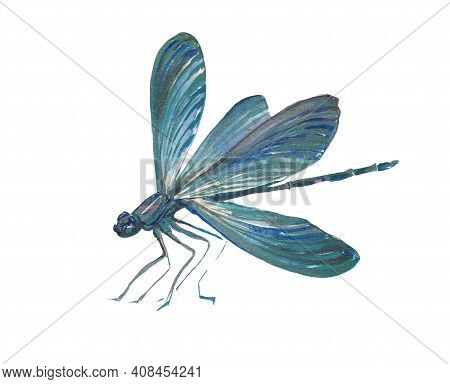 Blue Dragonfly Isolated On White Background. Graphic Watercolor Work Blue Dragonfly, The Illustratio