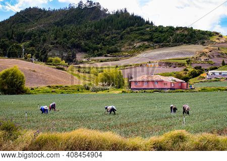 Peasants Working On A Green Onion Field At The Boyaca Department In Colombia