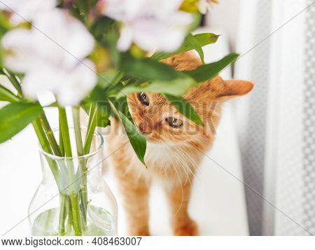 Cute Ginger Cat Sniffs Bouquet Of Alstroemeria Flowers In Glass Vase. Fluffy Pet And Blossoming Plan