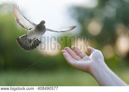 A Dove Flies Into A Woman's Hand On A Blurred Background.