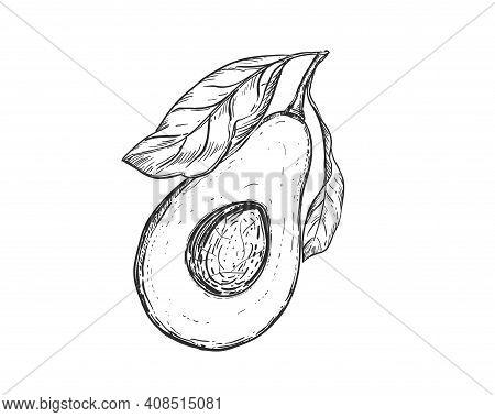 Hand Drawn Sketch Black And White Of Avocado Fruit, Leaf, Seeds, Slice. Vector Illustration. Element