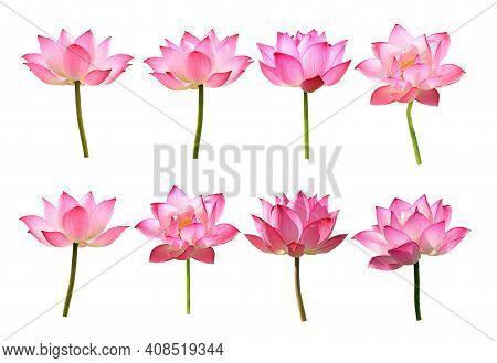 Set Of Lotus Flower On White Background
