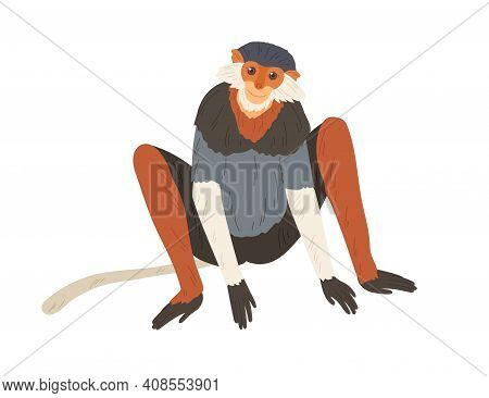 Cute Red-shanked Douc With Long Hair On Cheeks. Colorful Monkey With Slender Maroon Limbs. Hand-draw
