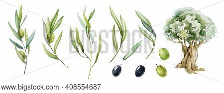 Olive Branch, Fruit, Leaves And Tree Watercolor Set. Black And Green Raw Organic Olive Plant Element