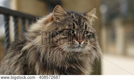 Funny Furry Adult Tiger Green-eyed Cat Sitting On The Embankment And Looks Out To Sea.