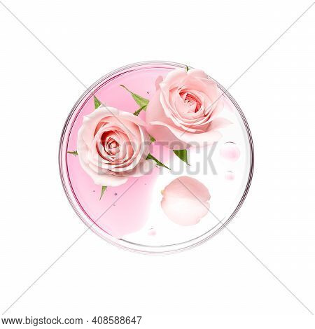Pink Rose With Essence On Petri Dish Over White Background