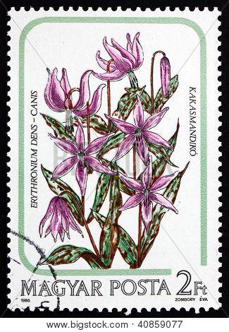Postage stamp Hungary 1985 Dogtooth Violet, Flower