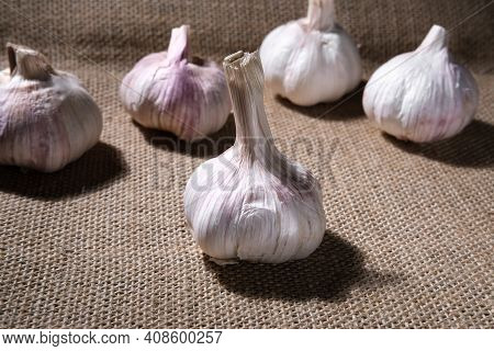 The Garlic Heads Are Arranged In Random Order. The Table Is Covered With A Textured Burlap Fabric. A
