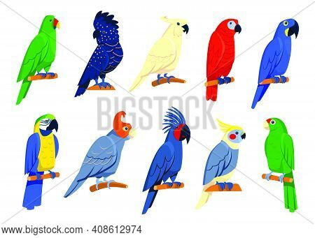 Bright Tropical Parrots Set. Exotic Birds Sitting On Branches, Red Or Blue Macaw, Blue Cockatoo, Gre