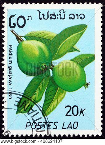 Laos - Circa 1989: A Stamp Printed In Laos Shows Common Guava (psidium Guajava), Edible Fruit Produc