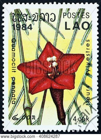 Laos - Circa 1984: A Stamp Printed In Laos Shows Cypress Vine, Quamoclit Pennata, Is A Species Of Vi