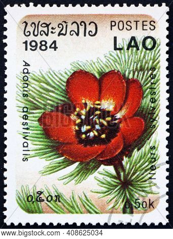 Laos - Circa 1984: A Stamp Printed In Laos Shows The Summer Pheasants-eye, Adonis Aestivalis, Is A M