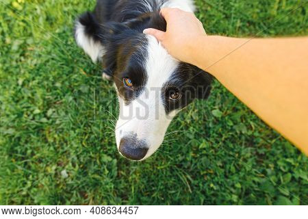 Woman Hand Stroking Puppy Dog Border Collie In Summer Garden Or City Park Outdoor. Close Up Dog Port