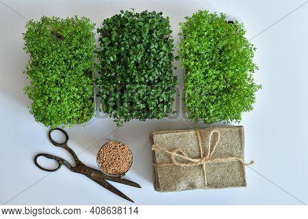 Microgreen Foliage Background. Close-up Of Radish Microgreens.vitamins On Windowsill. Vegan And Heal