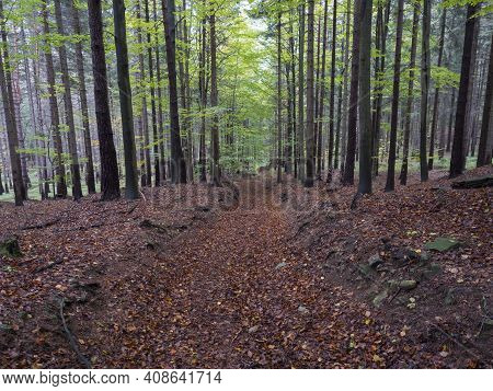 Road In Mysterious Autumn Deciduous Beech Tree Forest With Colorful Leaves, Sun Rays And Ground Cove