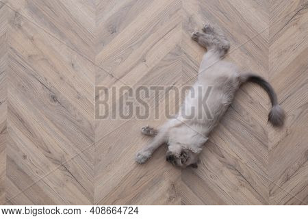 Beautiful Fluffy Cat Lying On Warm Floor In Room, Top View With Space For Text. Heating System