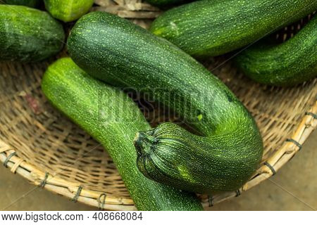 Squash Or Cucurbita Is A Genus Of Herbaceous Vines In The Gourd Family That Also Name Zucchini Squas