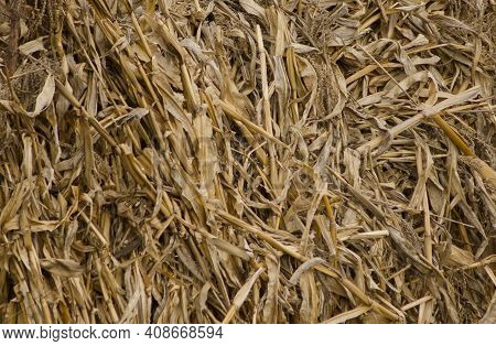 Texture Of Dried Corn Cobs Placed In Bundles