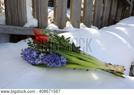 A Bouquet Of Spring Flowers Lies In The Snow.