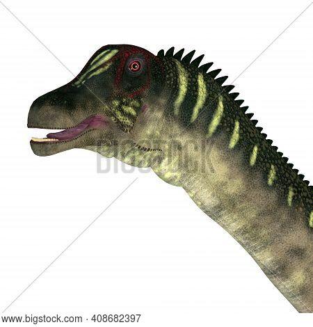 Antarctosaurus Dinosaur Head 3d Illustration - The Titanosaur Herbivorous Sauropod Dinosaur Antarcto