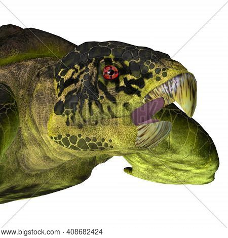 Archelon Turtle Head 3d Illustration - The Extinct Marine Archelon Turtle Lived In The Seas Of South