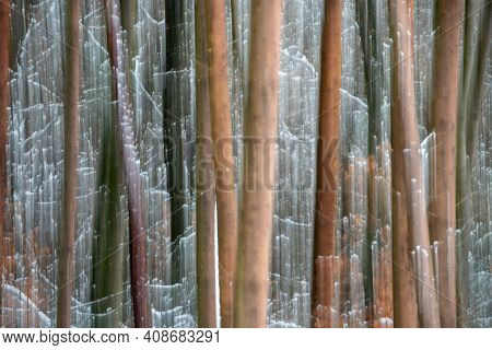 Abstract Tree Trunks In Winter Time Forest Of Taunus, Hesse, Germany
