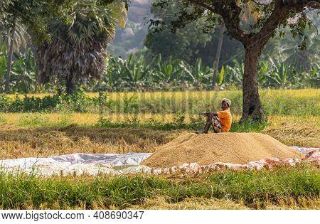 Hunumanahalli, Karnataka, India - November 9, 2013: Man In Orange Shirt Guards Yellow-brown Pile Of