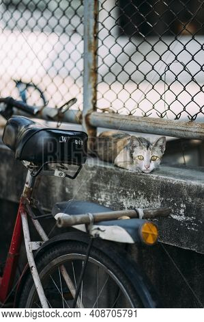 Cat With Big Yellow Eyes Staring At Lens, Sitting On Cement Wall Below Fence, With Bike Leaning Belo