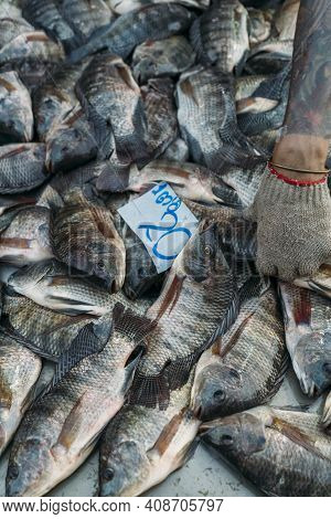 Pile Of Fish For Sale With Hand And Tatooed Arm Reaches For Fish At Market.