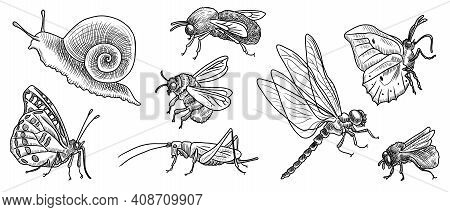 Vector Drawing Set Of Insects , Hand Drawn Illustration