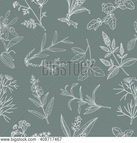 Floral Background With Hand Drawn Aromatic Garden Herbs, Seamless Pattern. Vintage Botanical Vector