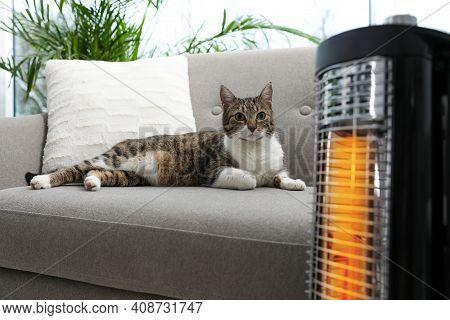 Cute Cat On Sofa Near Modern Electric Halogen Heater Indoors