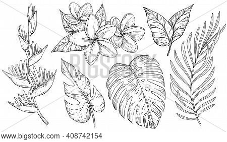 Vector Set Of Tropical Leaves. Palm, Banana Leaf, Monstera, Heliconia And Frangipani Flowers. Black