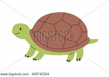 Cute And Funny Green Turtle With Brown Shell. Side View Of Happy Tortoise Character Standing Isolate