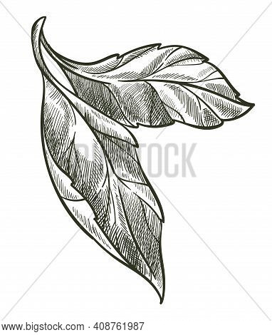 Leaf On Branch, Flora Monochrome Sketch Outline