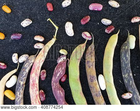 Group Of Colorful Kidney Beans Pod With Black Background, High Angle Shot Of Colorful Kidney Beans P
