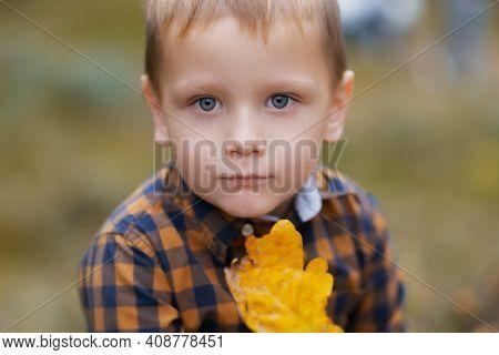 Little Child Explores An Oak Leaf. Kid Exploring Nature. Autumn Activity For Inquisitive Child