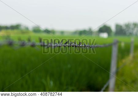 Shallow depth of field shot of a barbed wire used as boundary for a farm