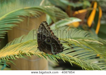 Beautiful tropical butterfly stay on green plant poster